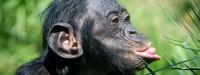از بین بردن جنگلها و انتقال مالاریای میمونها به انسان