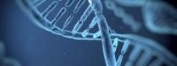 تاثیر ژنها بر هیکل زنان/ لگن بزرگ و کوچک در زنان نشانه چیست؟