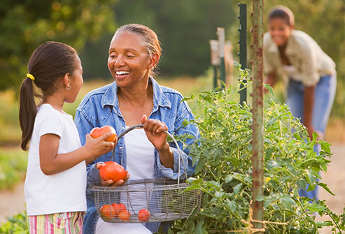 getty_rf_photo_of_woman_picking_tomatoes