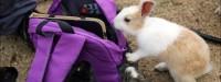 جزیره خرگوش های وحشی بامزه در ژاپن (عکس)